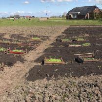 Verhoogde bedden met compost om uit de zware en natte klei te komen.
