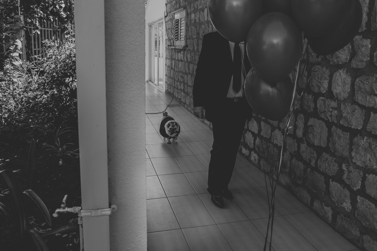 dubrovnik croatia wedding french buldog