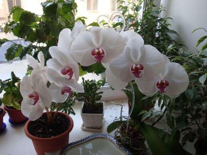 Pot de fleurs pour orchidées 2 L Pot De Plantation plastique Orchidées-Casserole Niveau Vert