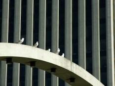 Pidgeons at Nathan Phillips Square_6284507024_l
