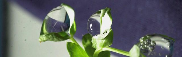 Sinne: ZEN Meditation verbessert Wahrnehmung