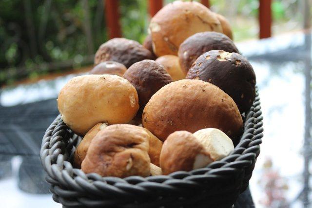 Funghi porcini in fricassea