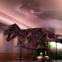 The Field Museum-6