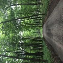 Morton Arboretum-5