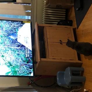 New TV-4