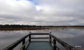 Bibra Lake