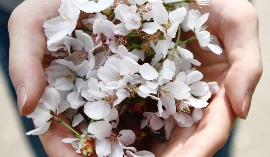 kukat, avoimet kämmenet