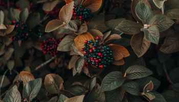 close up photo of berries