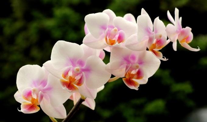 orhideje, kako pravilno njegovati, vrt&dom, dan po dan