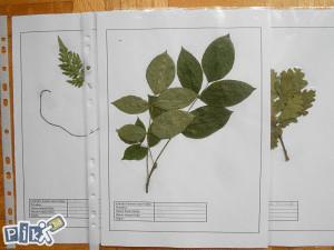 Herbarij biljke za Herbarij