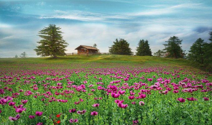Svjedočanstvo o selidbi: Dom je tamo gdje smo s Gospodinom