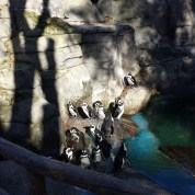 minibreak to Madrid with toddler : penguins at Zoo