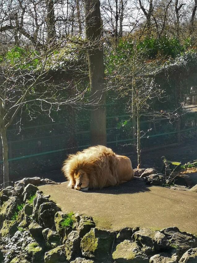 Paradise Wildlife Park Hertfordshire big cats - Fab animal park near London
