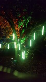 Kew Gardens Chritmas Trail