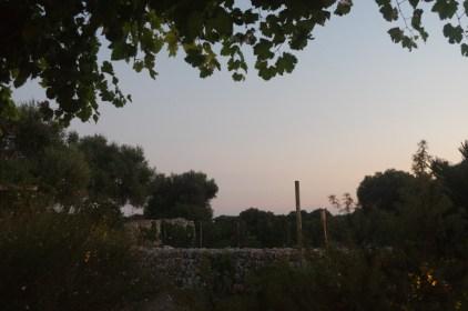 Menorca guide: vineyards. Best places in Menorca