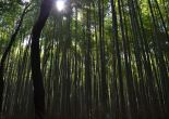 Japan with kids: Bamboo forest in Sagano