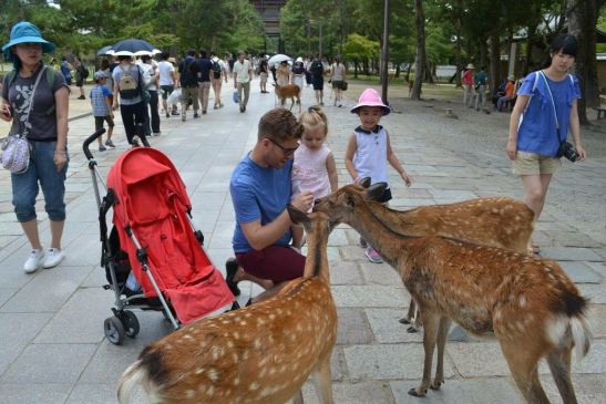 Japan with toddler: Nara