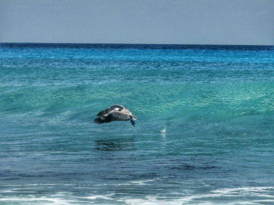 which Caribbean island: St Martin