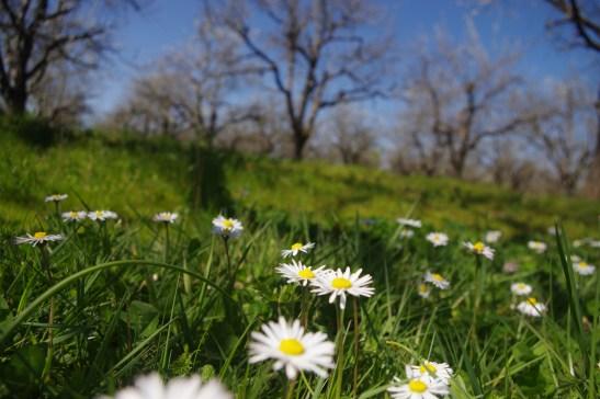 Spring Dordogne - Chateau les Merles