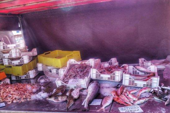 Favignana harbour - fresh fish