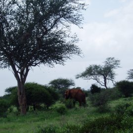 Tsavo national park safari