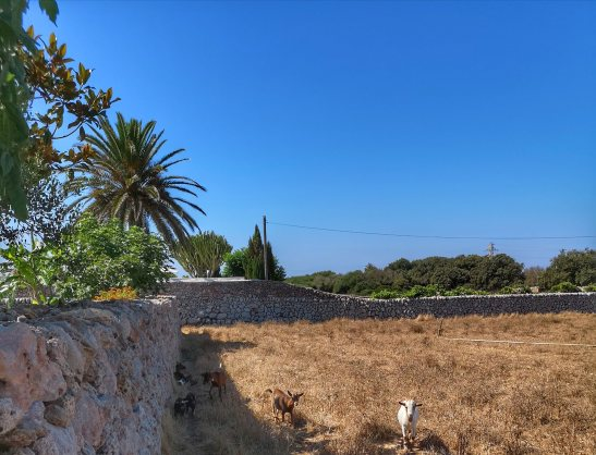Llucmacanes Gran - agroturismo Menorca