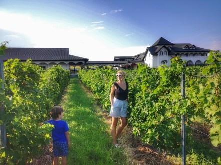 Retreat in Romanian wine regions and best of Romanian wineries: Ceptura Dealu Mare