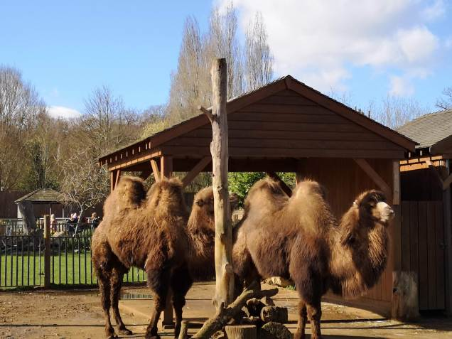 Camels PWP