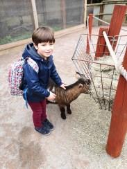 Chessington for kids - goats