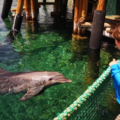 Eilat dolphin reef - welcome back - Israel road trip