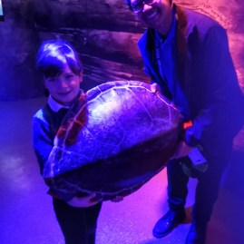 London aquarium - turtle shell confiscated by customs for traficking