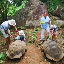 Wildlife & conservation Anse Intendance Seychelles