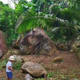 Kids feeding tortoises - Banyan Tree Conservation Centre
