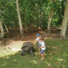 Courieuse island and its tortoises roaming freely