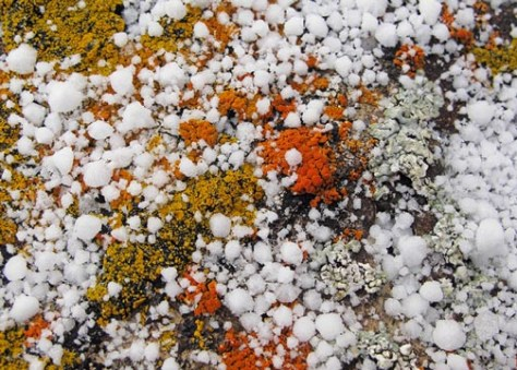 Snow and lichen juxtaposition.