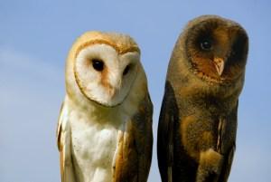 insight owls