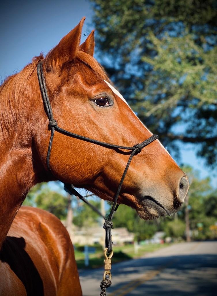 Zenerjen Pony Persona Personality Test - Dante