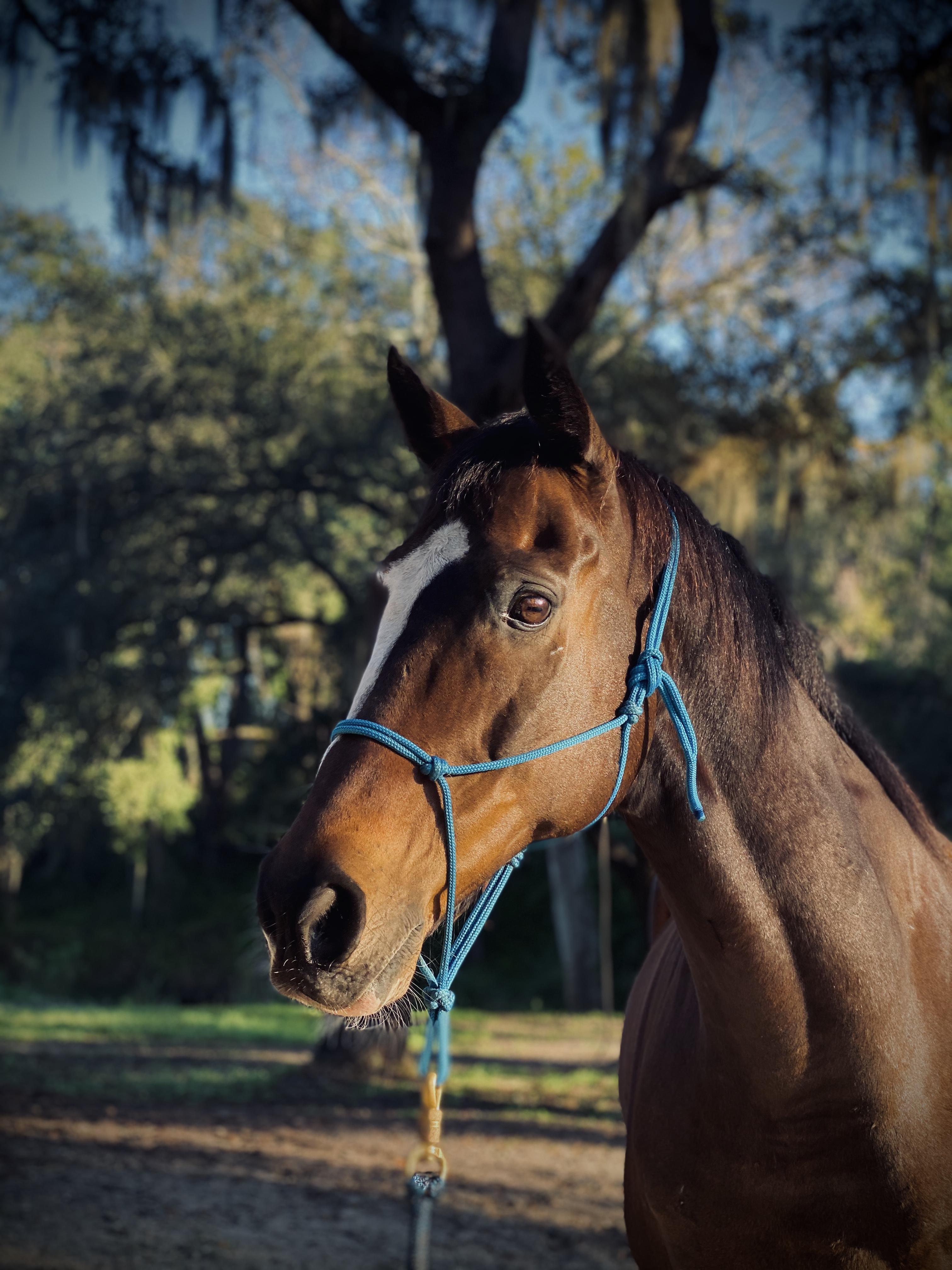 Zenerjen Pony Persona Personality Test - Maverick
