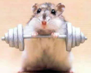 Workout hamster