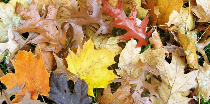 iowa_fall_leavesw