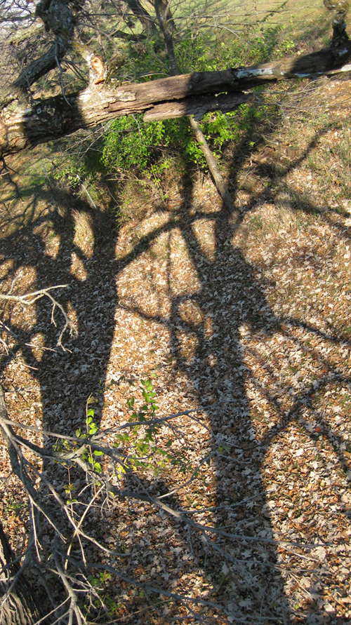 shadow_of_treestand1