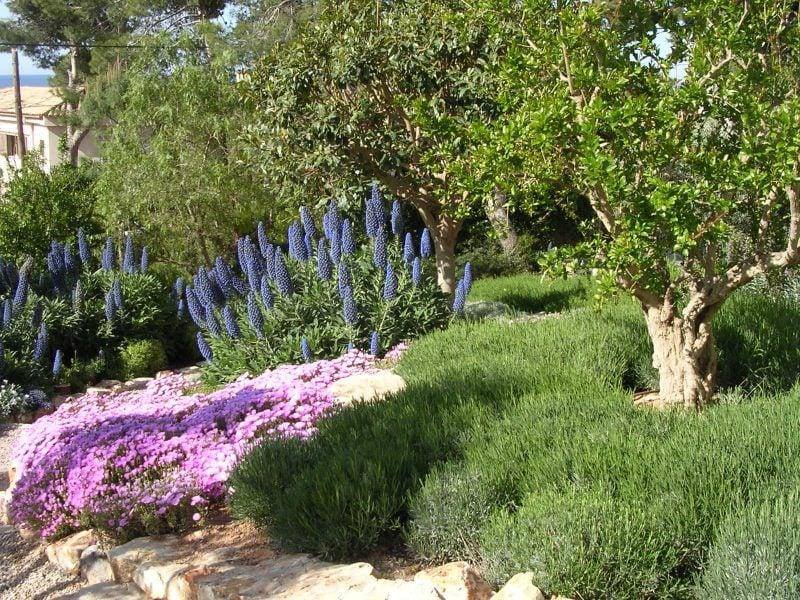 mediterrane pflanzen fur den garten - 28 images ...