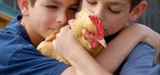 eren {sea+prairie}, no other chicken is more loved
