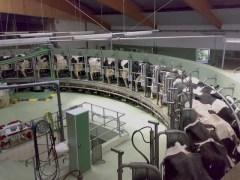 Gunnar Richter, allevamento intensivo di mucche da latte