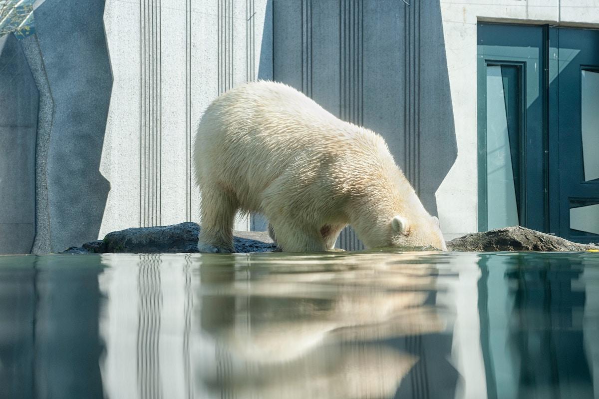 Deep Adaptation: affrontare la tragedia climatica con l'adattamento profondo