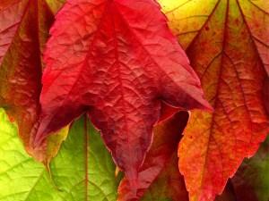 Autumn_Leaves_XXXL____by_MichiLauke