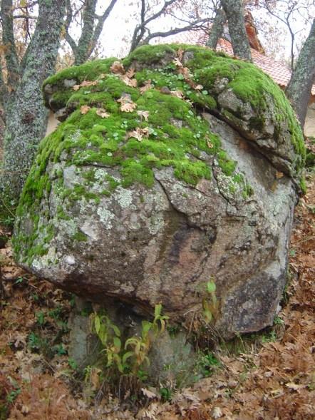 Roca y musgo