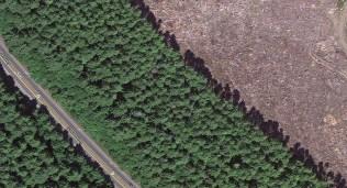 A wider line of Sitka Spruce and Red Cedar. Imagery ©2014 DigitalGlobe, Landstat, State of Oregon, USDA Farm Service Agency. Map Data ©2014 Google