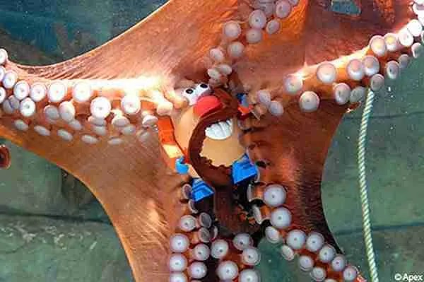 octopuspotato.jpg