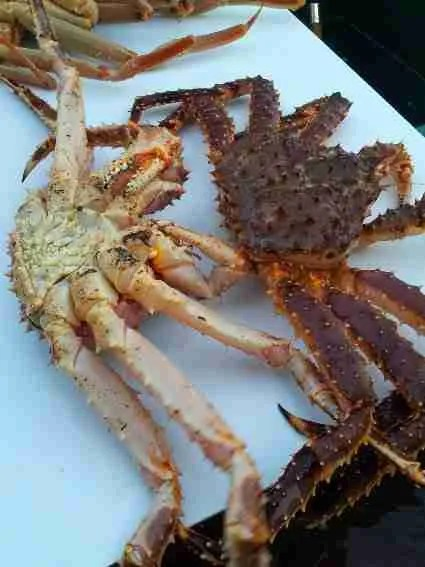 A Day in King Crab Vegas